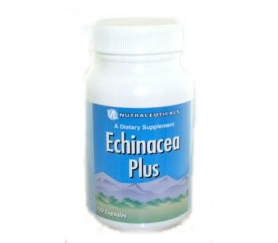 Эхинацея Плюс / Echinacea Plus